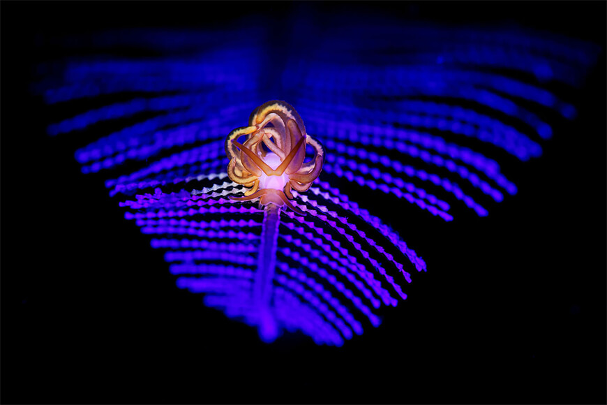 "Commended, Macro. ""It is not easy to combine blue light in a traditionally lit image. You need to make the subject pop while integrating the blue light into the photo naturally."" Photographed near Lembeh, Indonesia."